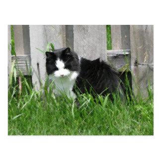 Farm Cat Art Postcard