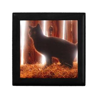 Farm Kitten Gift Box