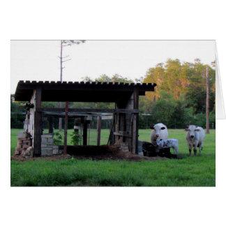 Farm Life (7326) - Cows Card