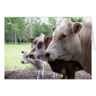 Farm Life (7416) - Cows Card