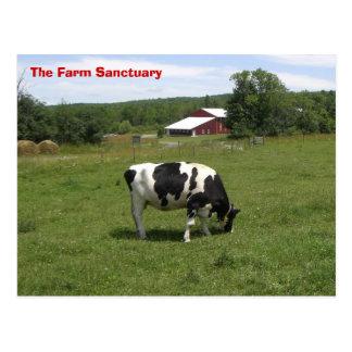 Farm Sanctuary Cow Postcard