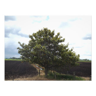 farm tree fields photo print
