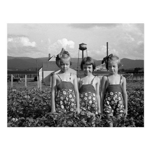 Farmer's Daughters, 1939 Post Card