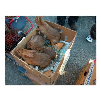 Farmer's market, Louans, Bresse, rabbits Postcard