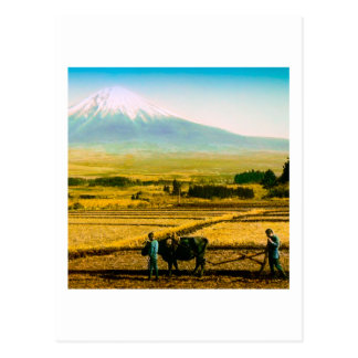 Farmers Oxen Plowing Field in Shadow of Mt. Fuji Postcard