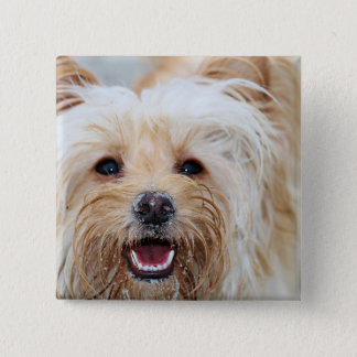 Farris - Lucy - Mixed Breed 2 Inch Square Button