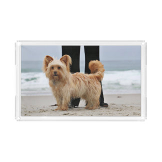 Farris - Lucy - Mixed Breed Acrylic Tray