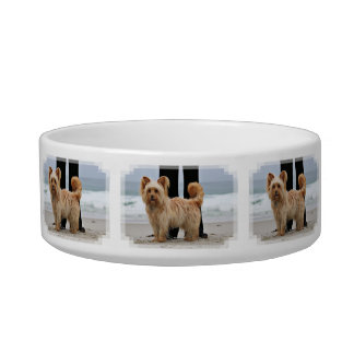 Farris - Lucy - Mixed Breed Bowl