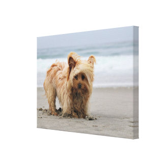 Farris - Lucy - Mixed Breed Canvas Print