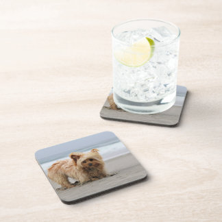 Farris - Lucy - Mixed Breed Coaster
