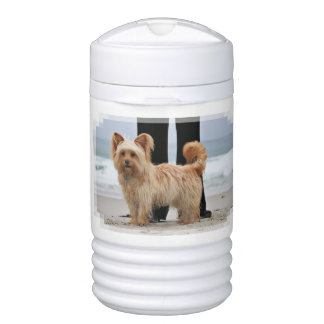 Farris - Lucy - Mixed Breed Cooler