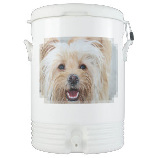 Farris - Lucy - Mixed Breed Drinks Cooler