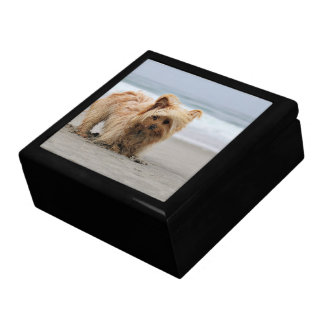 Farris - Lucy - Mixed Breed Gift Box