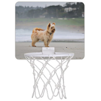 Farris - Lucy - Mixed Breed Mini Basketball Hoop