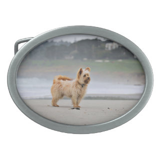 Farris - Lucy - Mixed Breed Oval Belt Buckles