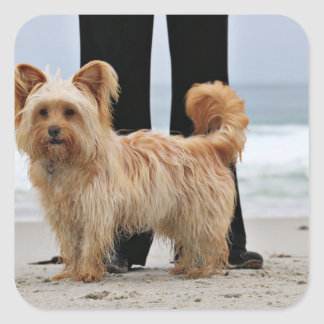Farris - Lucy - Mixed Breed Square Sticker