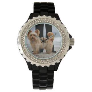 Farris - Lucy - Mixed Breed Watch