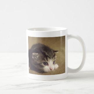 Fascinated Kitten Mug