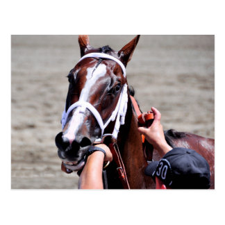Fashion Alert wins the Schuylerville Postcard