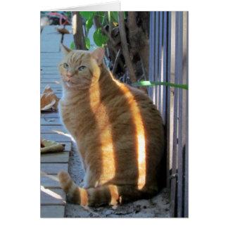 Fat Cat Sunny Daze :) Card