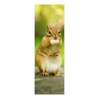Fat Chipmunk with Treat Pack Of Skinny Business Cards