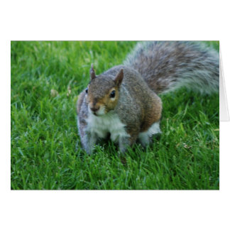 Fat Squirrel  Greeting Card