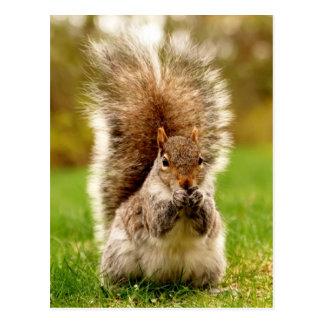 Fat Squirrel Postcard