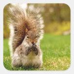 Fat Squirrel Square Sticker