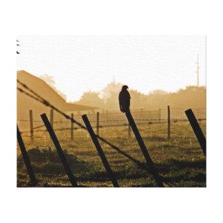 faucon de Rouge-queue dans le matin Toiles