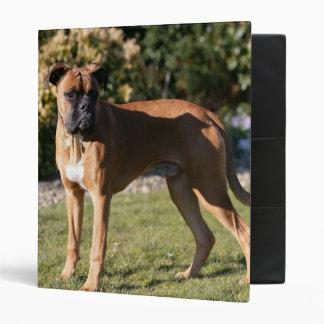 Fawn Boxer Dog Standing 3 Ring Binder