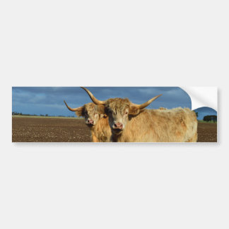 Fawn Coloured Highland Cows, Bumper Sticker