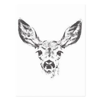 Fawn deer postcard