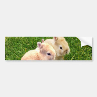 Fawn_Dwarf_Bunnies,_ Bumper Sticker