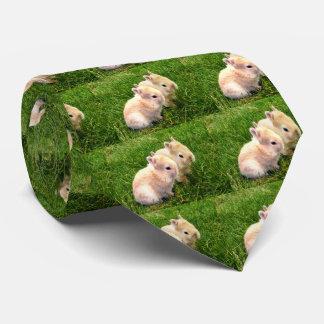 Fawn Dwarf Bunny Rabbits, Tie