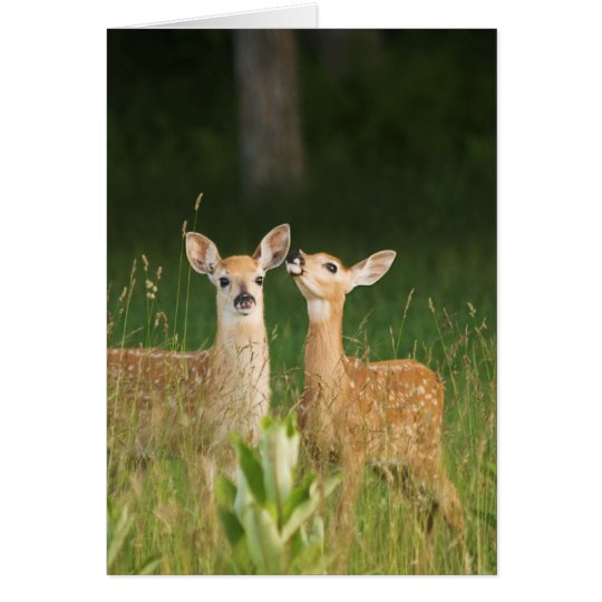 Fawn Greeting Card No. 6
