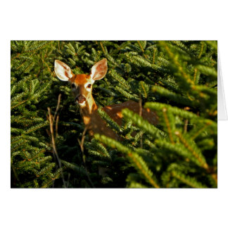 Fawn in Pine Trees Note Card