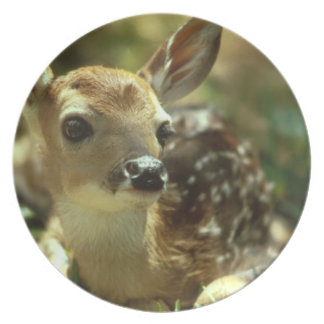 Fawn Plate