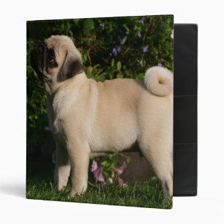 Fawn Pug Profile 3 Ring Binder