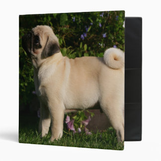 Fawn Pug Profile Binders