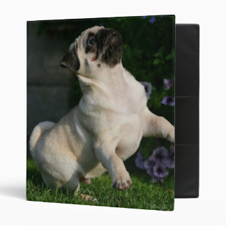 Fawn Pug Puppy 3 Ring Binders