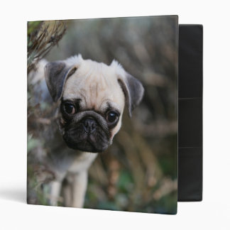 Fawn Pug Puppy Headshot 3 Ring Binders