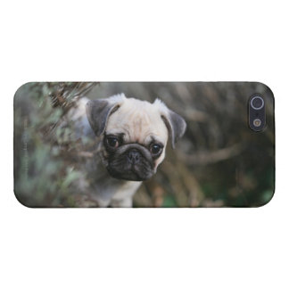 Fawn Pug Puppy Headshot iPhone 5/5S Cover
