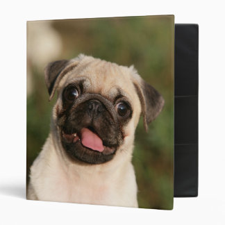 Fawn Pug Puppy Panting 3 Ring Binders