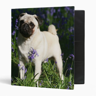 Fawn Pug Standing in the Bluebells Vinyl Binder