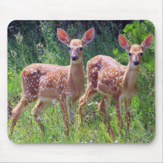 Fawn Twins in the Hawkweed Mousepad