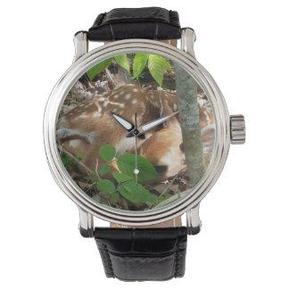 Fawn Watch