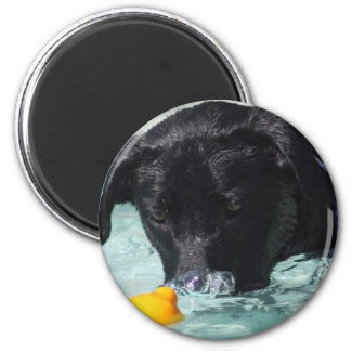 FB_IMG_1481505422550 Black Lab Magnet