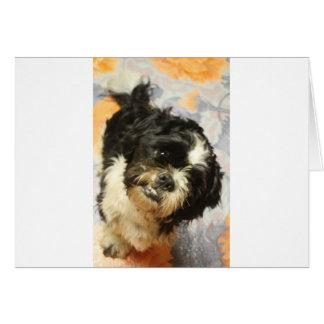 FB_IMG_1481505521015 Shitzu dog Card