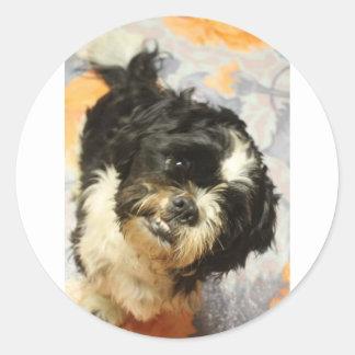 FB_IMG_1481505521015 Shitzu dog Classic Round Sticker