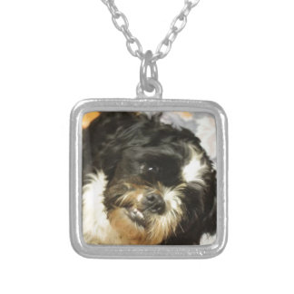 FB_IMG_1481505521015 Shitzu dog Silver Plated Necklace
